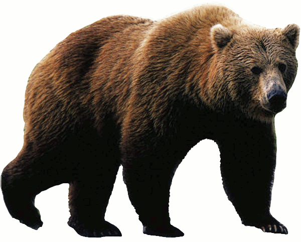 Grizzly clipart Bear Grizzly Grizzly Free com