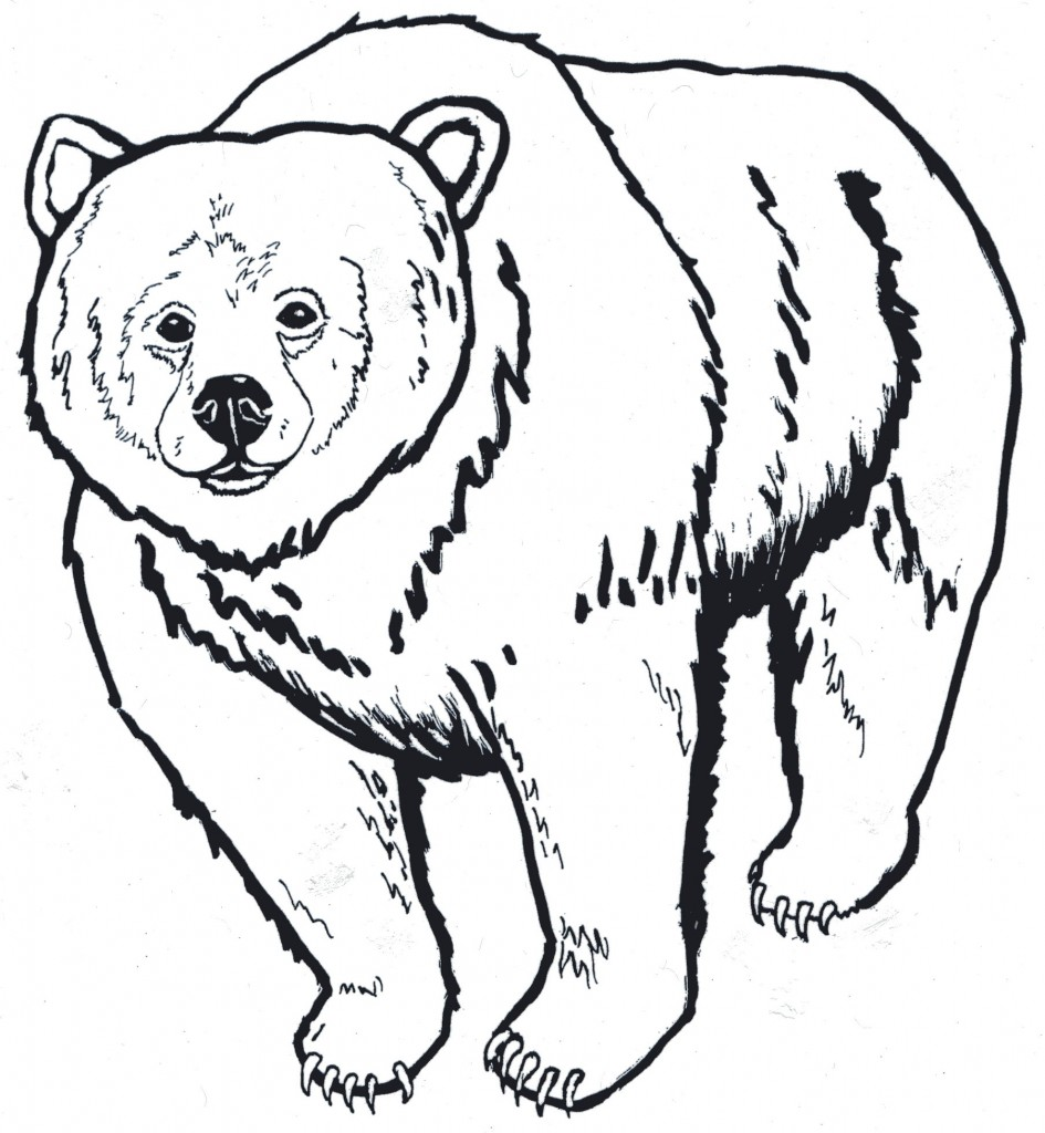 Grizzly Bear clipart outline #11