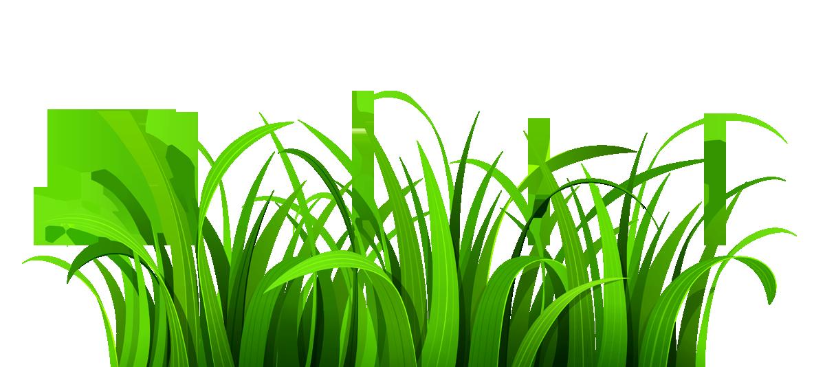 Beautiful clipart transparent background Grass transparent background Png transparent
