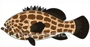 Grouper clipart Grouper grouper Free Clipart
