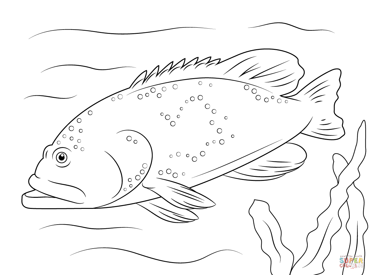 Grouper clipart Bluespotted Grouper Free Coloring coloring