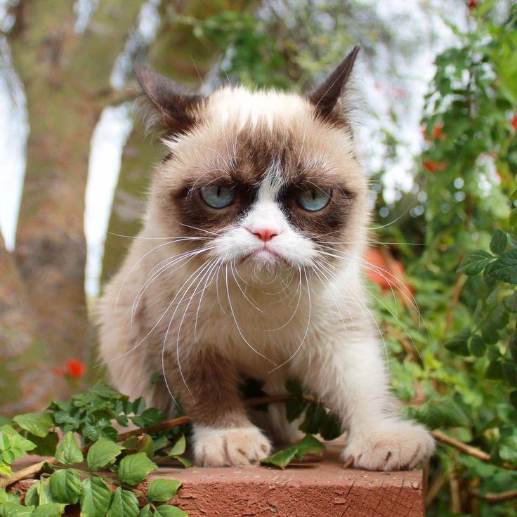 Grumpy Cat clipart animated #10
