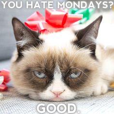 Grumpy Cat clipart animated #14