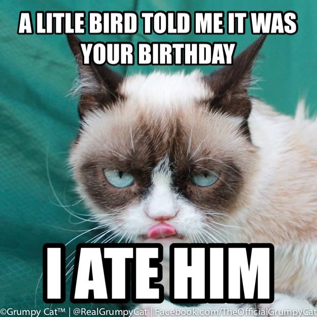 Grumpy Cat clipart birthday saying On images 16 you birthday