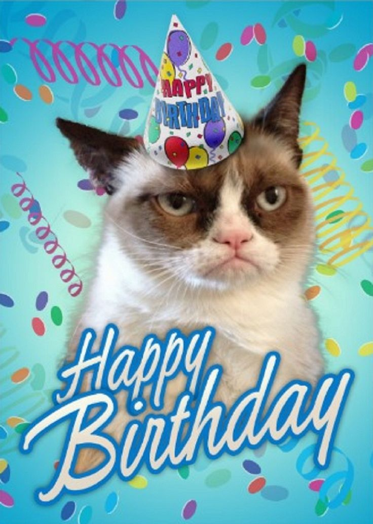Grumpy Cat clipart birthday saying Cards Bing Grumpy on images