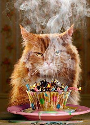 Grumpy Cat clipart birthday saying #6