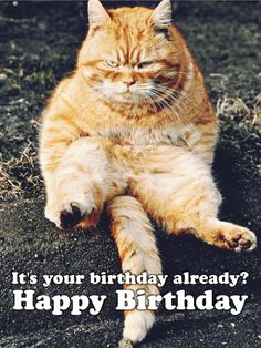 Grumpy Cat clipart birthday saying Happy older! are ones Funny