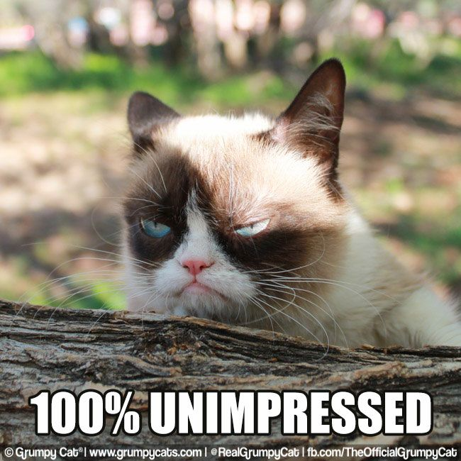 Grumpy Cat clipart impressed #6