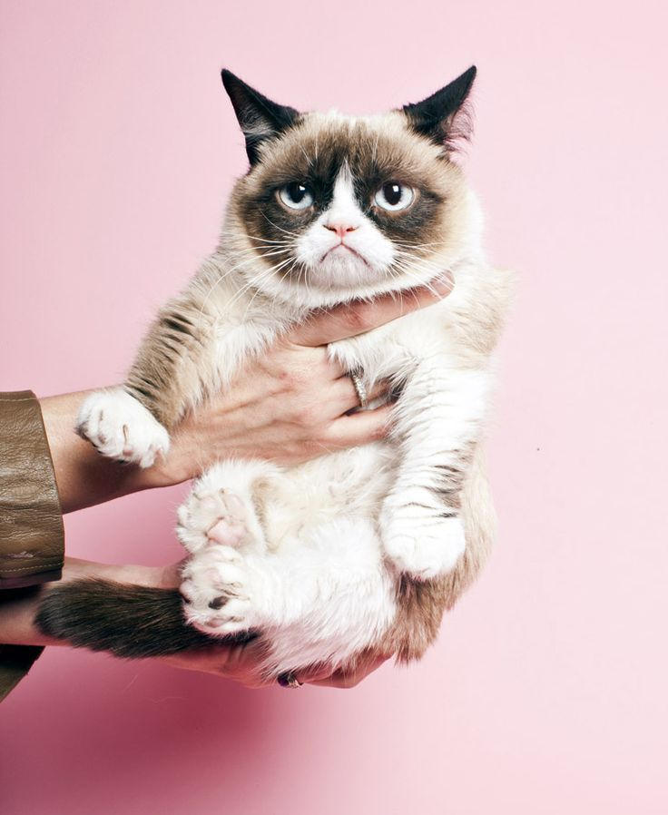 Grumpy Cat clipart impressed #8
