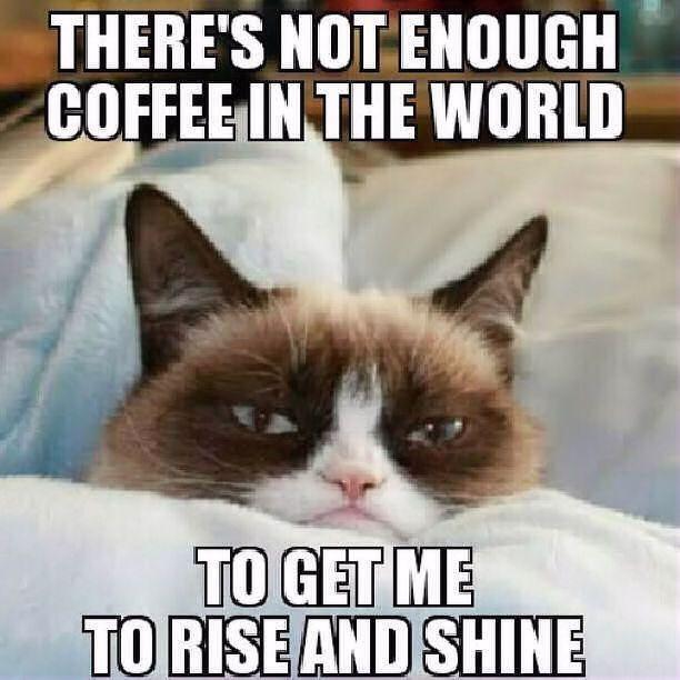 Grumpy Cat clipart not #7