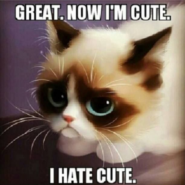 Grumpy Cat clipart sad kitty #3