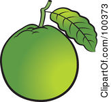 Guava clipart Clipart Free Panda Clipart guava%20clipart