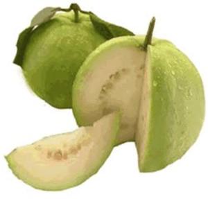 Guava clipart Online clip Images art