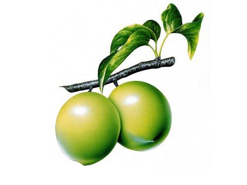 Guava clipart Panda Clipart Clipart art Guava