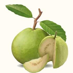 Guava clipart Cliparts Art Clip Art Guava