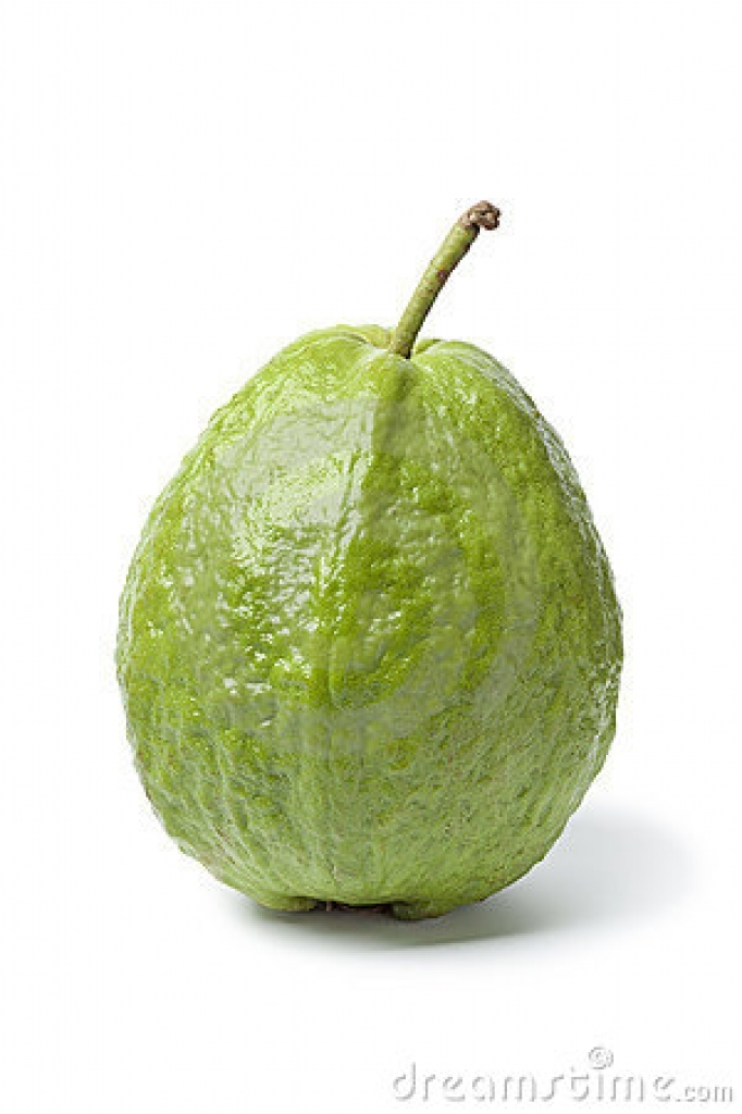 Guava clipart  stock fresh fruit clipart