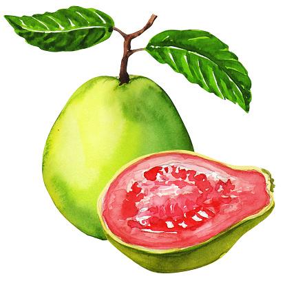 Guava clipart Clipart art Guava Guava photo