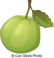 Guava clipart  Illustration Vector on and