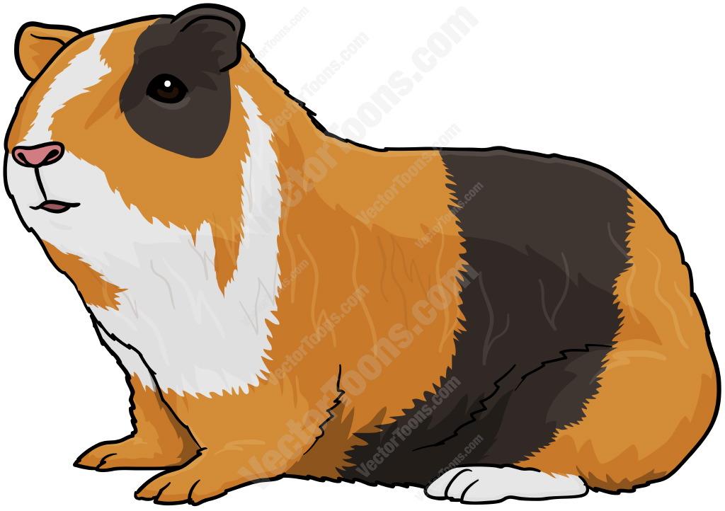 Guinea Pig clipart Mixed Pigs Explore more! Pig