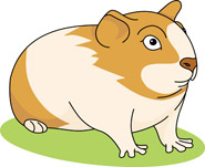 Guinea Pig clipart Guinea Results Pictures From: Graphics