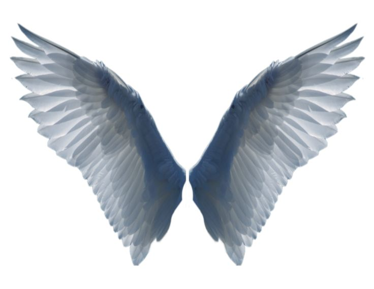 Halo clipart dove wings About images Graphics Good Angel