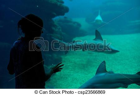 Hammerhead clipart aquarium The in the in csp23566869