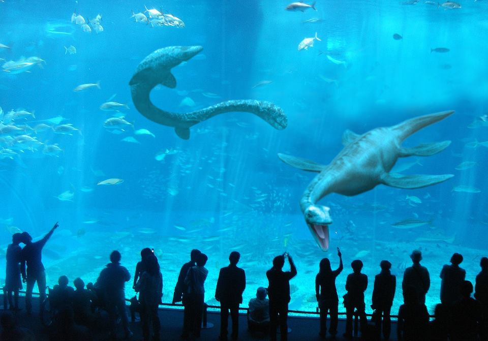 Hammerhead clipart aquarium Download #4 Download Bay drawings