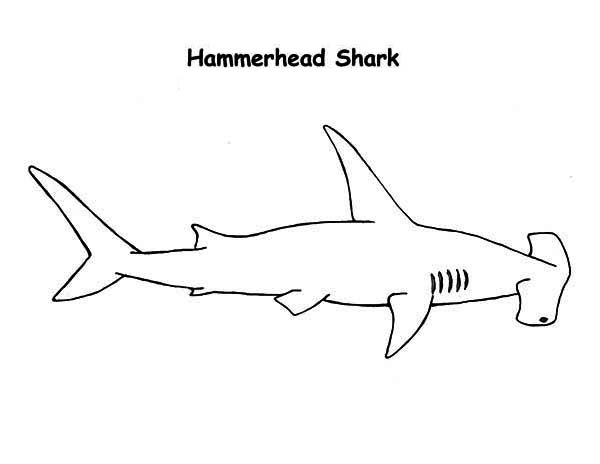 Bull Shark clipart hammerhead shark Shark Realistic Drawing Drawing Drawing