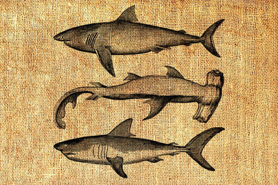 Hammerhead clipart great white shark Vintage from png Download White