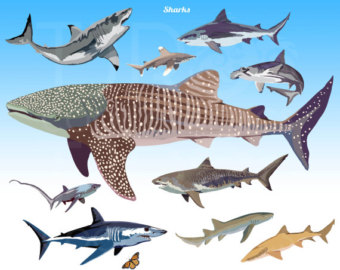 Sharkwhale clipart big #2