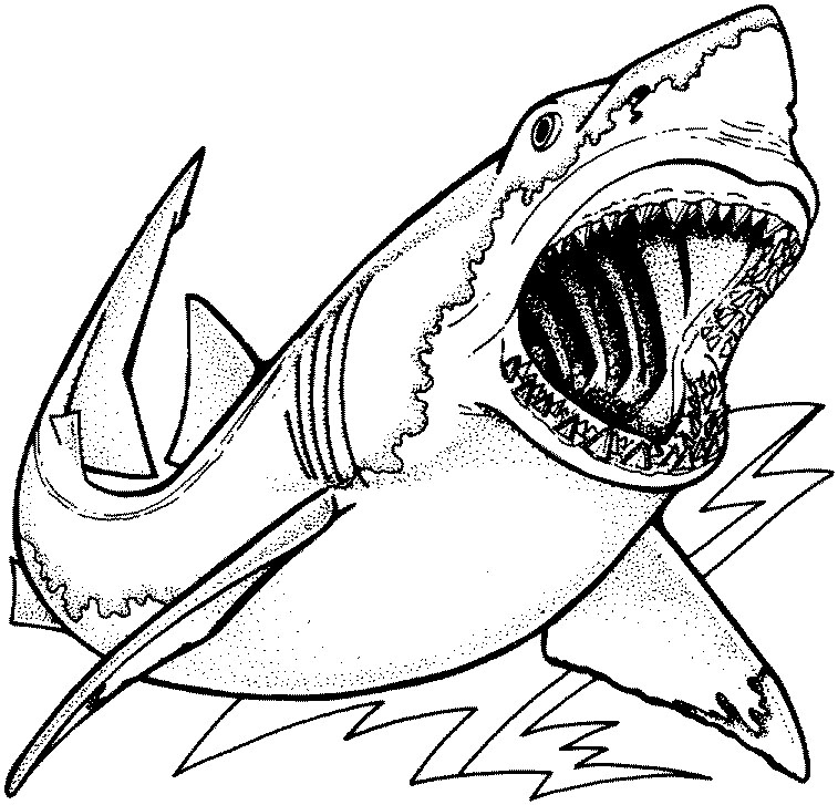 Hammerhead clipart great white shark Free Pages Shark Coloring Clip