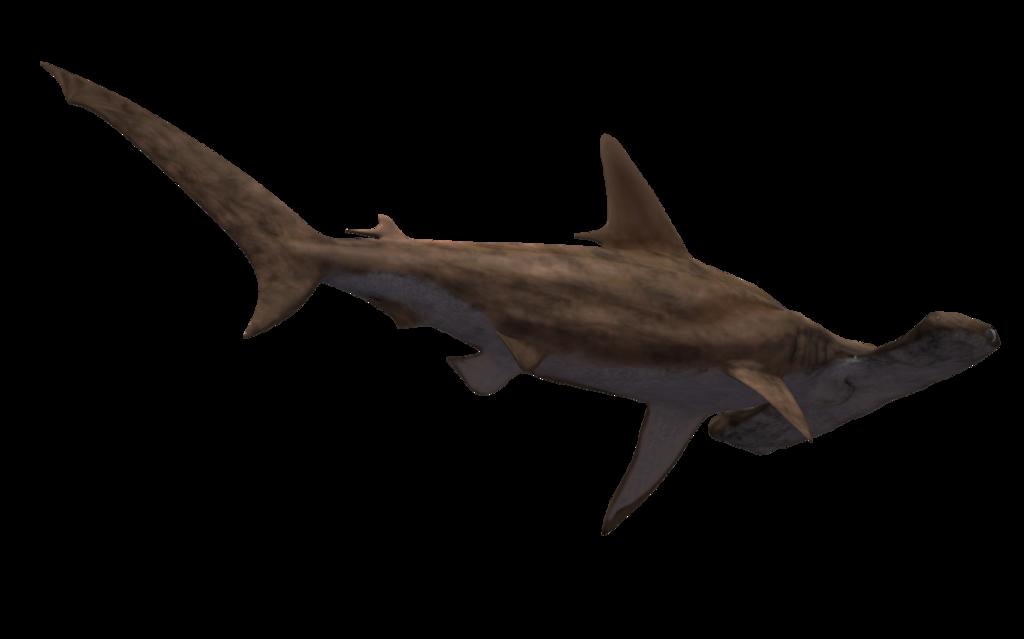 Hammerhead clipart great white shark Png #42753 Shark image Free