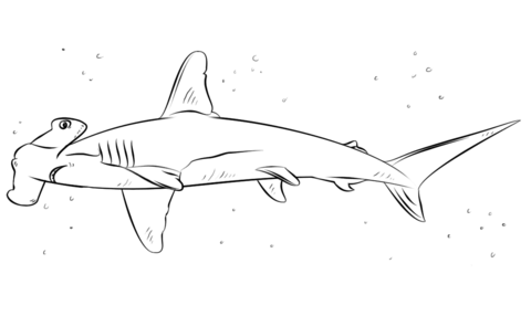 Hammerhead clipart mako shark Pages  Coloring coloring Pages