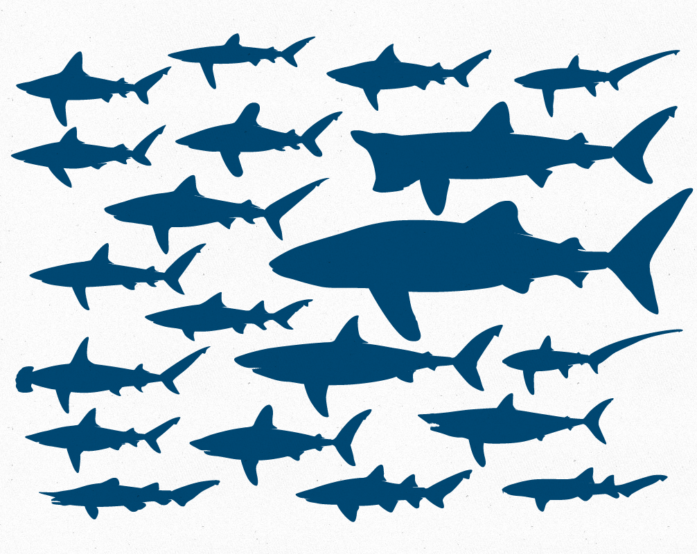 Shark clipart shark outline #14