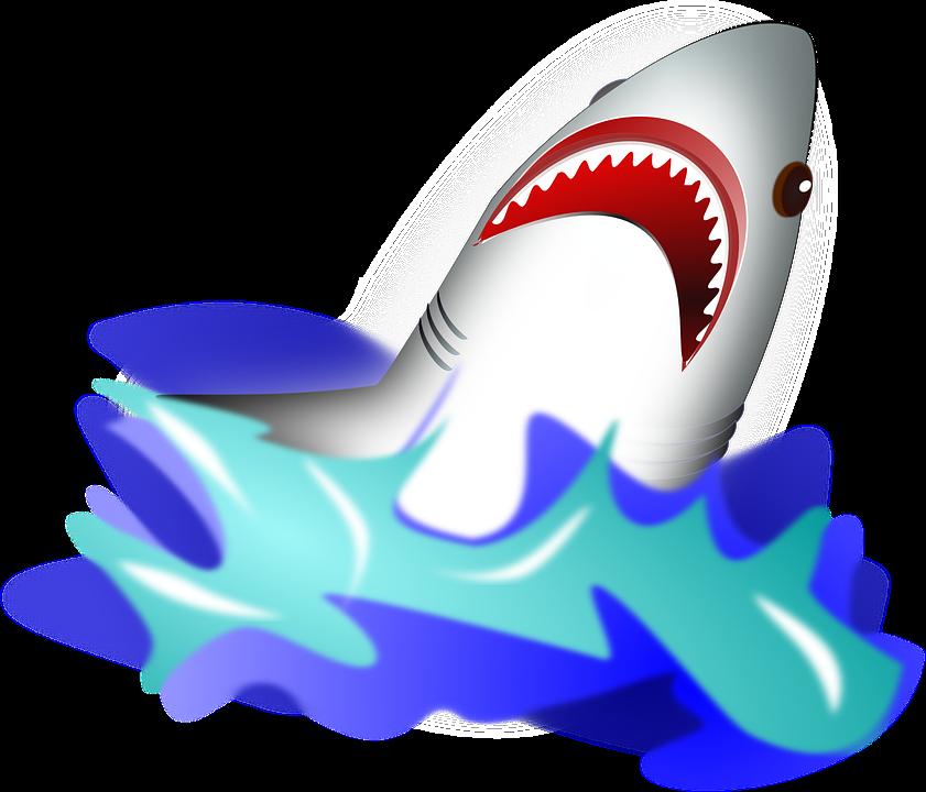 Hammerhead clipart ocean fish Pixel Bangkok Shark photo Attack