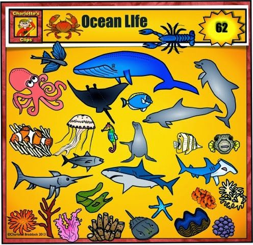 Hammerhead clipart sea animal Clipart Sea life on from