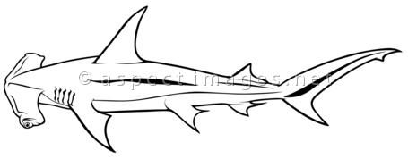 Hammerhead clipart shark outline Drawing Hammerhead line Line Shark
