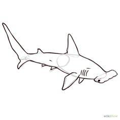 Hammerhead clipart shark outline Outline Hammerhead outlines Shark Hammerhead