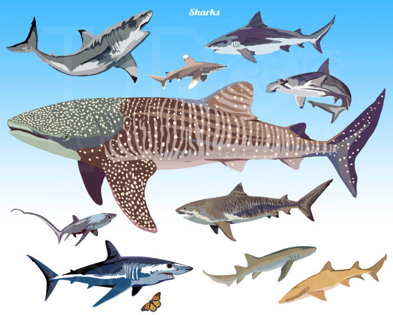 Hammerhead clipart tiger sharks Whale Commercial Sharks Shark Clip