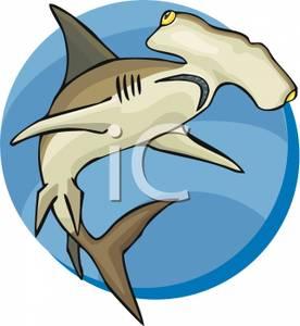 Hammerhead clipart tiger sharks Clip Clipart Hammerhead hammerhead%20shark%20clipart Art