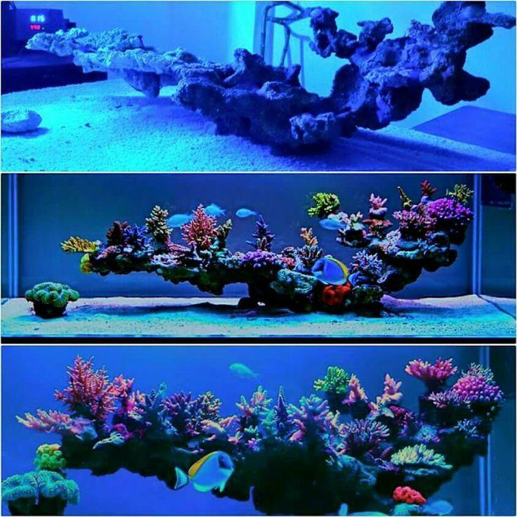 Hard Rock clipart aquarium stone This live rock ideas on