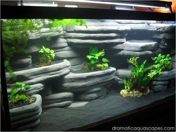Hard Rock clipart aquarium stone Aquarium Background Rock that you