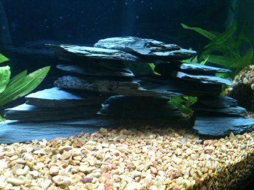 Hard Rock clipart aquarium stone Images PC Aquarium about Natural