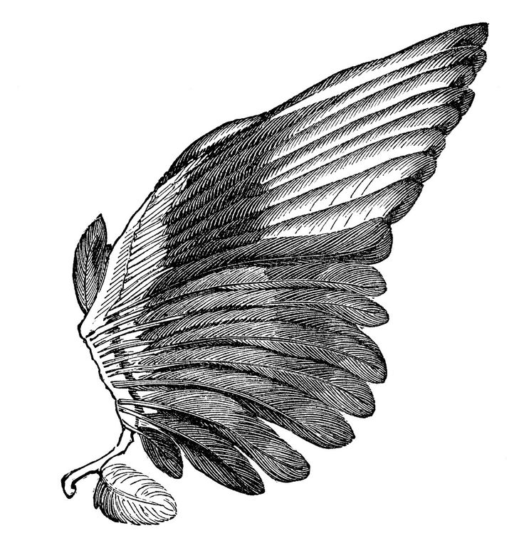 Hard Rock clipart feather wing Image wings ideas Clip Vintage