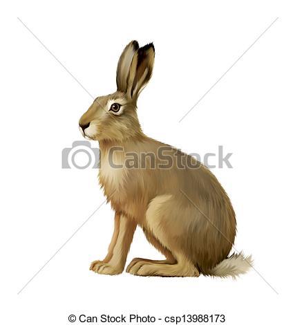 Hare clipart Stock Illustrations white hare EPS