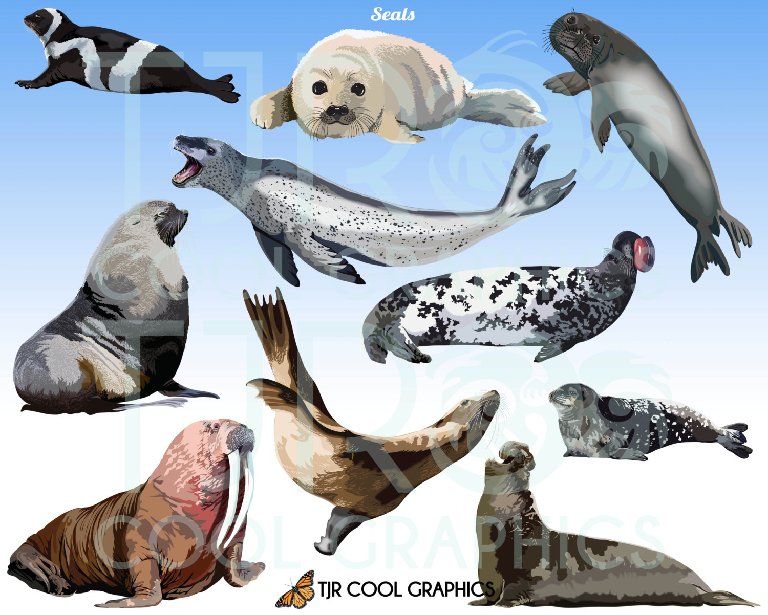 Harp Seal clipart Seals Harp Art Sea Digital