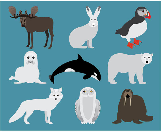 Polar Fox clipart arctic seal Animals Animal  Puffin Snowy