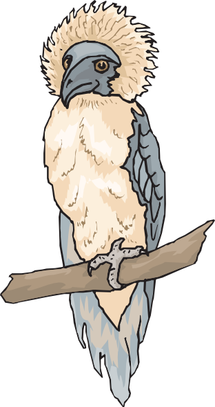 Harpy Eagle clipart Harpy Eagle  this image