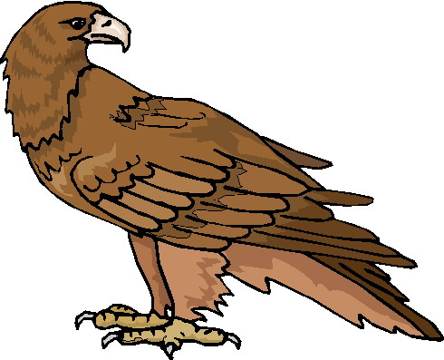 Harpy Eagle clipart White free clipart black clipart