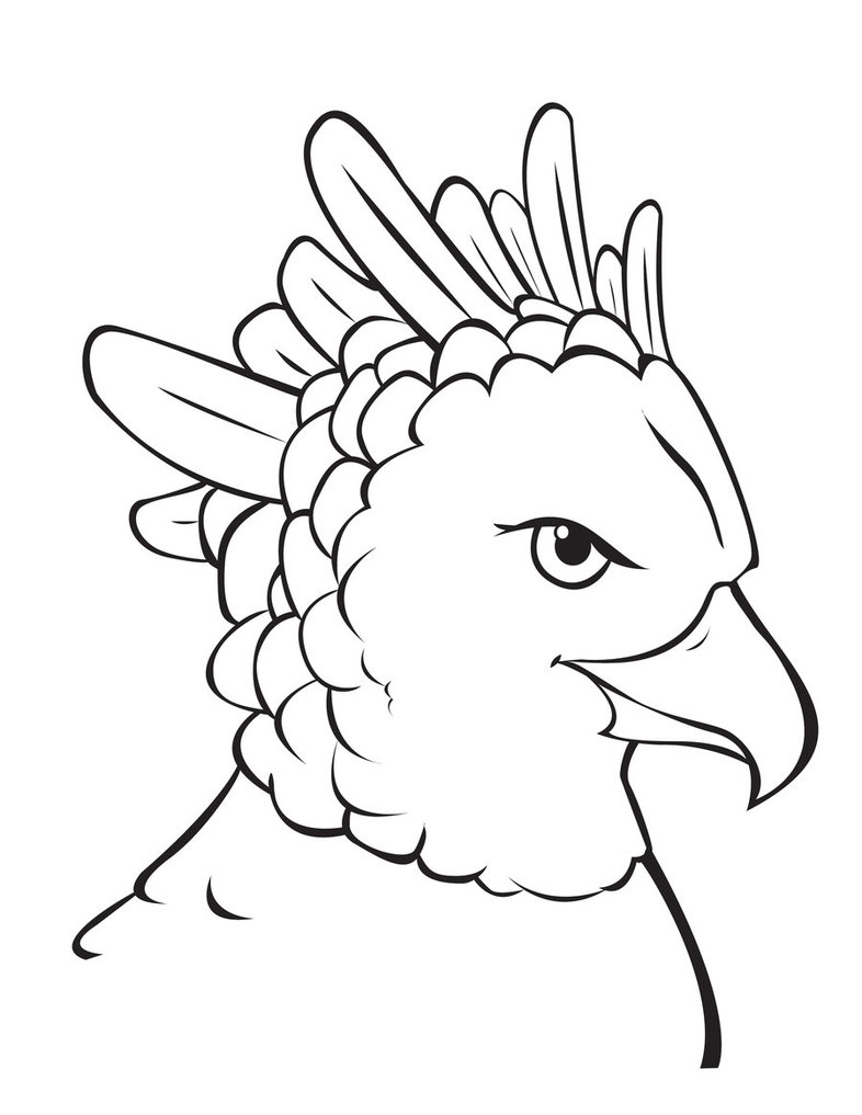 Harpy Eagle clipart Harpy Eagle Eagle by by